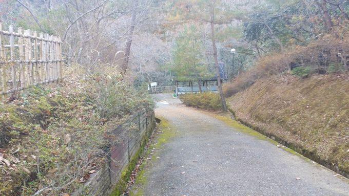 清和県民の森 キャンプ場の奥へ続く道