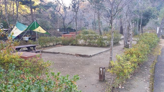 清和県民の森 キャンプ場 手前のサイトの雰囲気