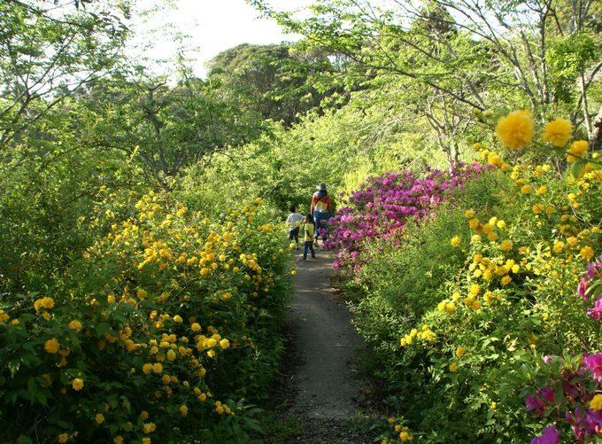 しあわせの丘リゾートキャンプ場の春の花