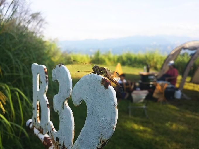 キャンプ場に訪れるトンボ