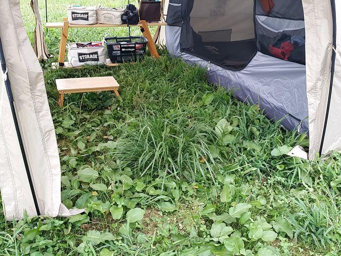 テント内も深い草が生い茂る