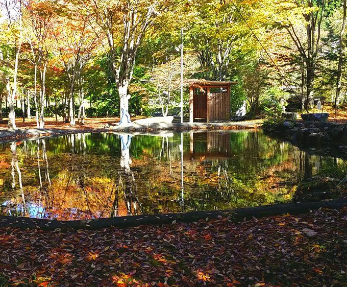 オートキャンプせせらぎの池と紅葉