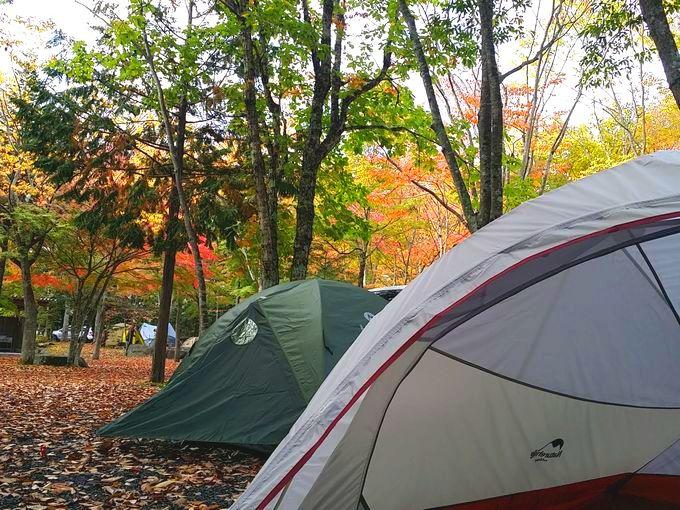 ソロキャンプ用テントと紅葉