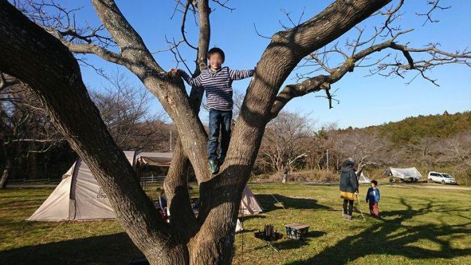2019年1月下旬 森のまきばで木登り(長男)