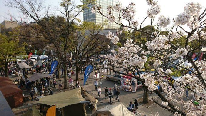 アウトドアデイジャパン東京2019の桜