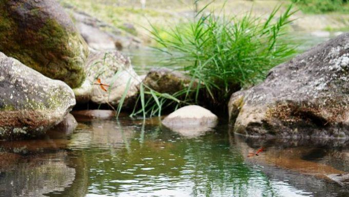 那須で川遊び カワトンボ