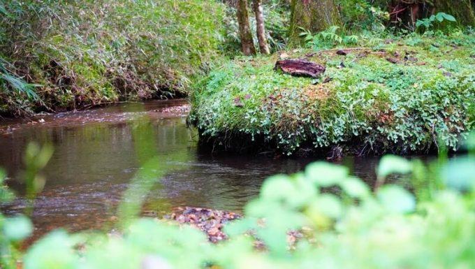 キャンプラビット 場内の川
