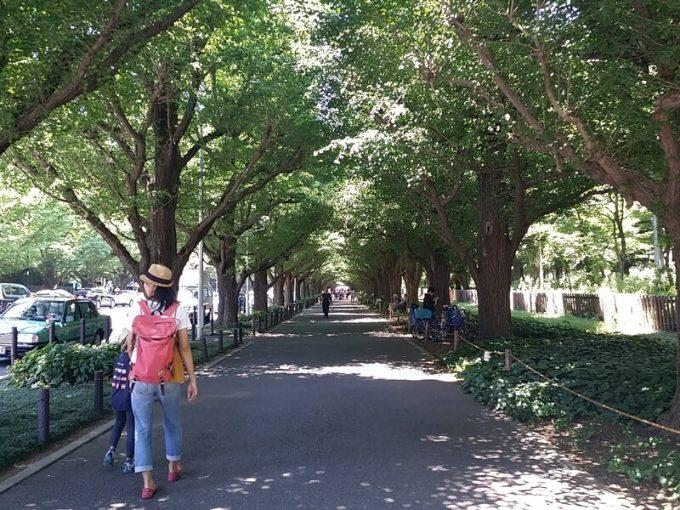 コールマン アウトドアリゾートパーク 神宮外苑の銀杏並木