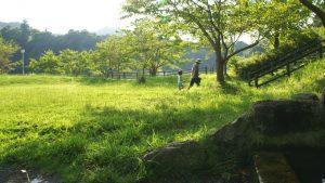 13営 稲ヶ崎キャンプ場は芝が深くて爽快! 湖畔サイトは眺望良し!