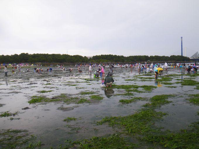 海の公園 昼の干潟3