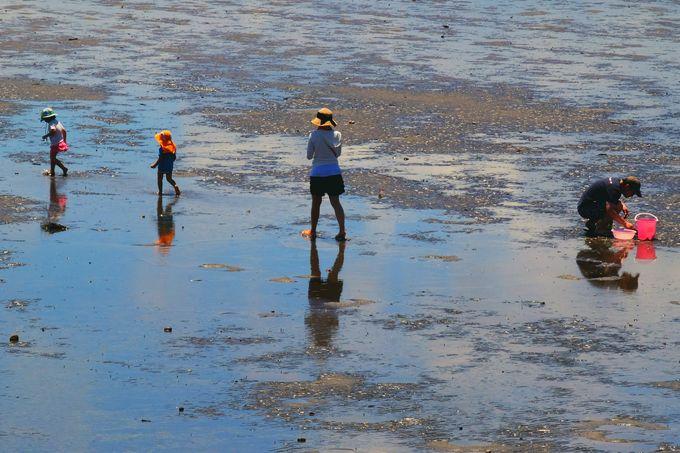 潮干狩りの光景