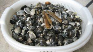 潮干狩り 貝の種類と食べられない貝を知る ★保存版★